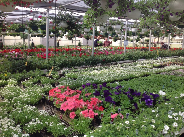 The greenhouse effect: Visiting a garden nursery can be an instant mood lifter.
