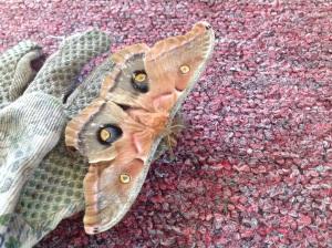Moth jpeg